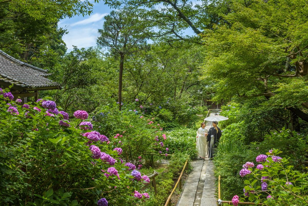 鎌倉 和装 前撮り 紫陽花がきれいなお寺 白無垢 あじさい