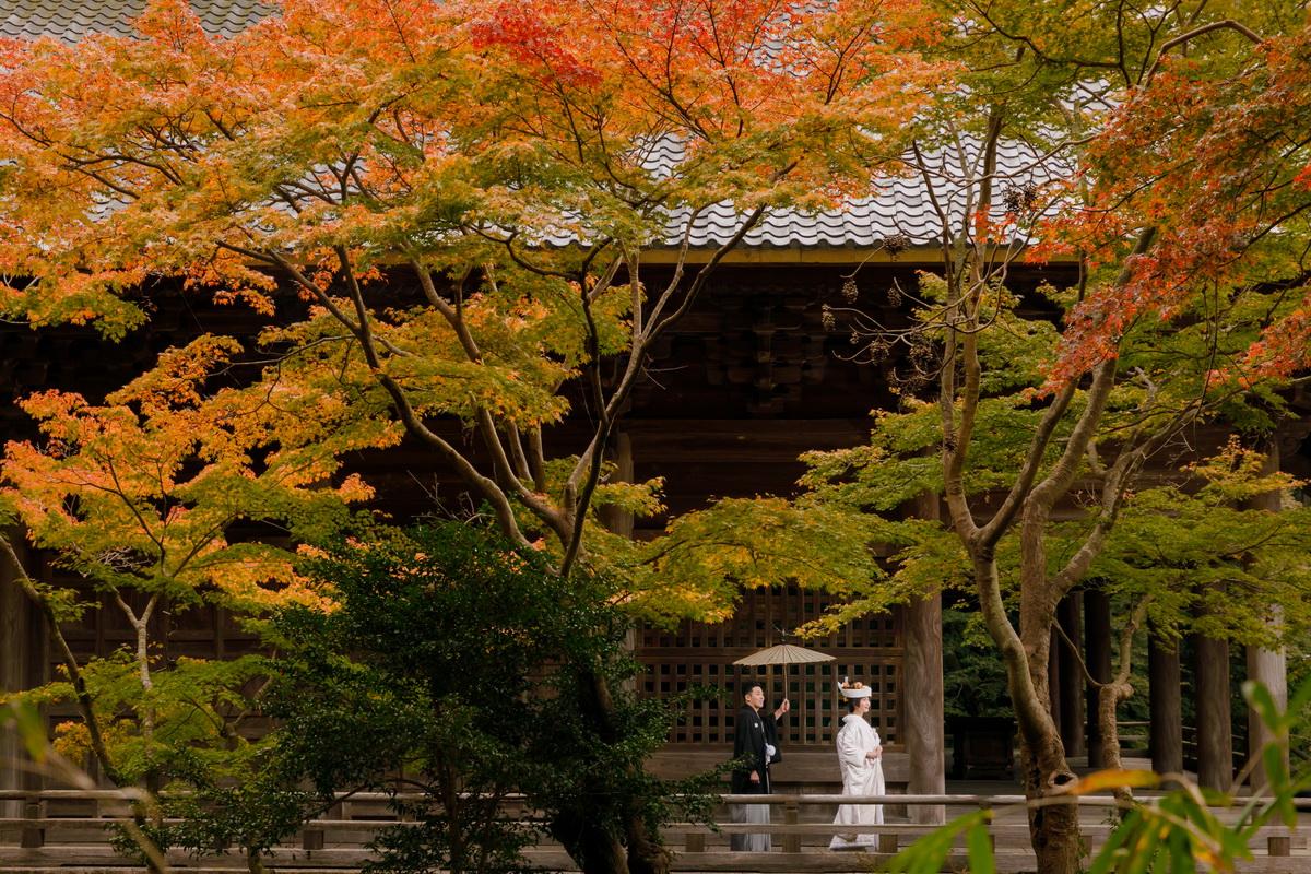 妙本寺の12月の紅葉